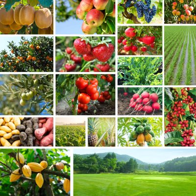 Formulati Dom Terry Agrisolutions per ogni settore della nutrizione vegetale